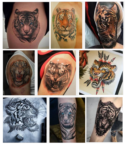 best-tiger-tattoo-designs-and-meanings-with-images
