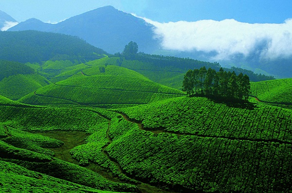 Honeymoon Places in India in December-Kerala