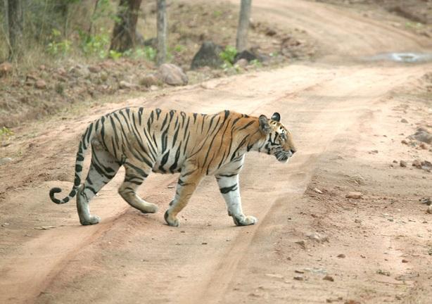 achanakmar-sanctuary_chhattisgarh-tourist-places