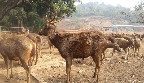 assam-state-zoo-and-botanical-garden-guwahati-tourist-places
