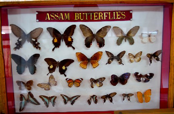 butterfly-museum_shillong-tourist-places