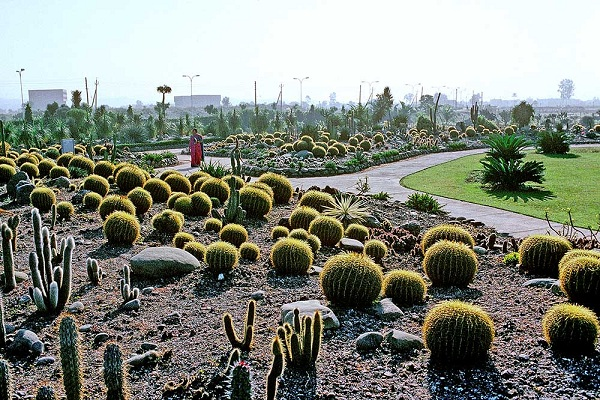 cactus-garden_chandigarh-tourist-places