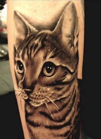 cat animal tattoo