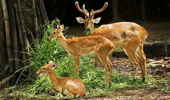 Dehradun Tourist Places to Visit-Malsi Deer Park