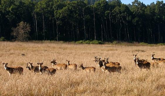 Dehradun Tourist Places to Visit-Rajaji National Park