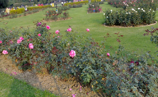 famous-flower-garden_chandigarh-tourist-places