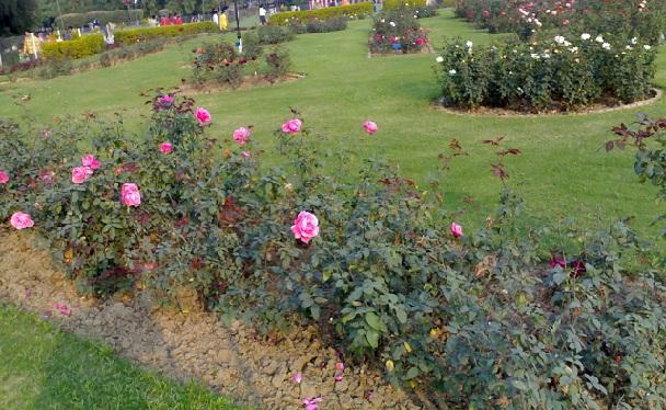 famous-flower-garden_chandigarh-tourist-places