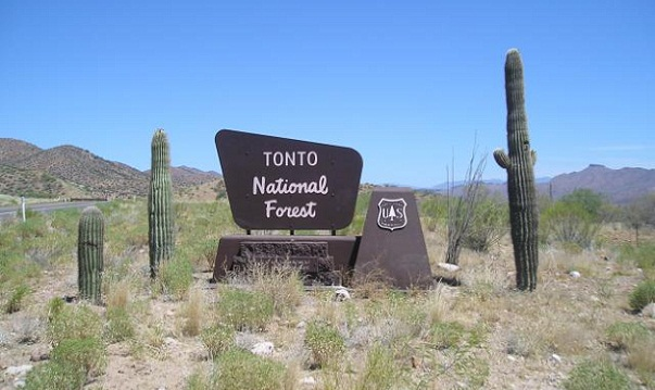 Famous Forest Camping Grounds-Tonto National Forest, Arizona
