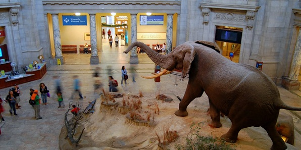 Famous Museums in Delhi-National Museum of Natural History