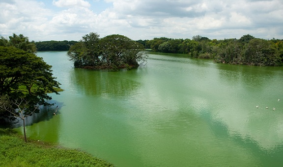Famous Parks in Mysore-Karanji Lake Nature Park