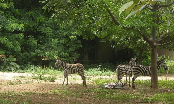 Famous Parks in Mysore-Sri Chamarajenra National Park