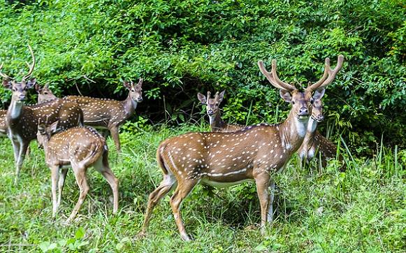 Famous Parks in Ooty-Deer Park