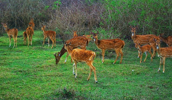 Honeymoon Places in Kashmir-Bandipur