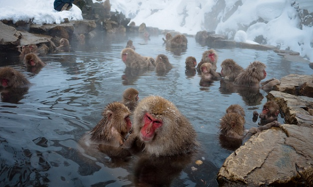 jigokudani-monkey-park_japan-tourist-places