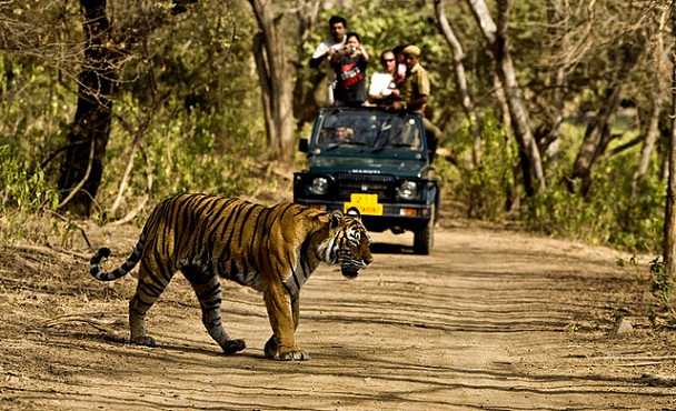 jim-corbett-national-park_uttarakhand-tourist-places