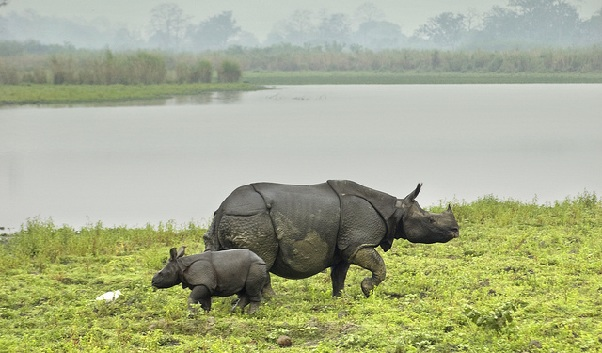 kaziranga-national-park_assam-tourist-places