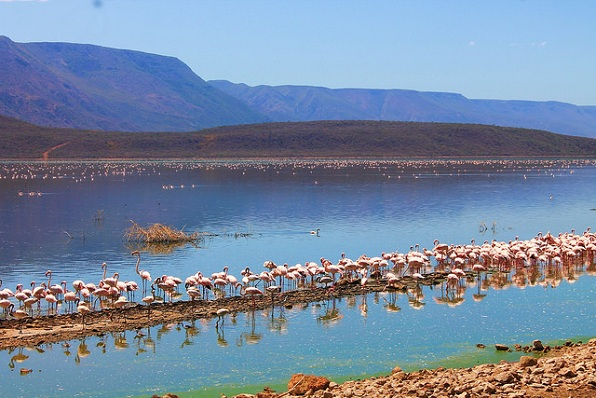 lake-nakuru_kenya-tourist-places