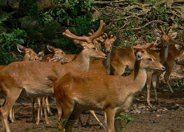 manipur-zoological-garden_manipur-tourist-places