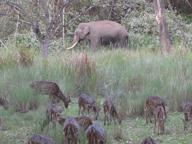 nagarhole-national-park_coorg-tourist-places