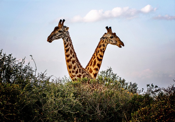 nairobi-national-park_kenya-tourist-places