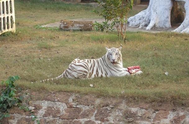 nandankanan-zoological-park_orissa-tourist-places