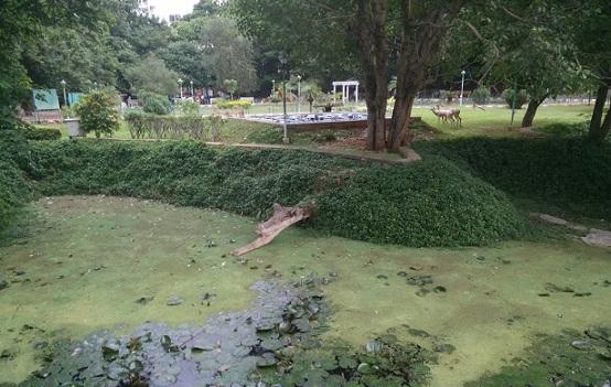 parks-in-bangalore-jayamahal-park