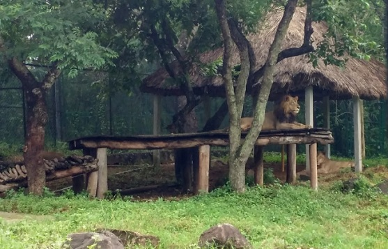 parks-in-chennai-anna-zoological-park