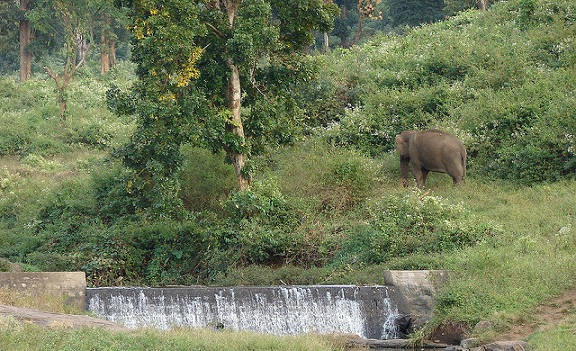 parks-in-coimbatore-indira-gandhi-wildlife-sanctuary-and-national-park
