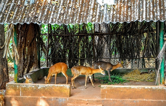 parks-in-goa-bondla-wildlife-sanctuary