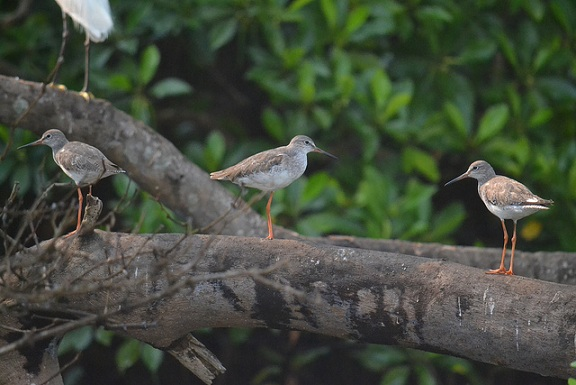 parks-in-goa-the-salim-ali-bird-sanctuary
