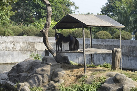 parks-in-jamshedpur-tata-steel-zoological-park