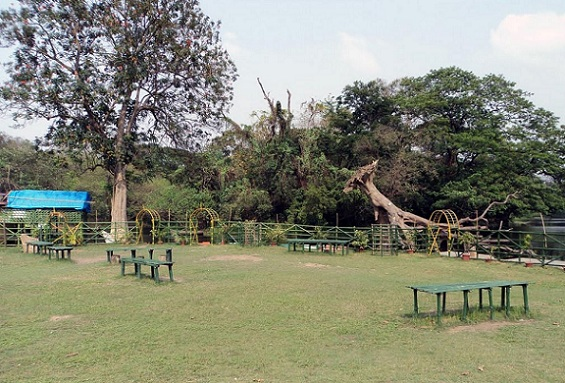 parks-in-kolkata-botanical-gardens