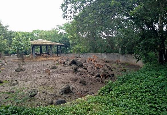 parks-in-pune-rajiv-gandhi-national-park