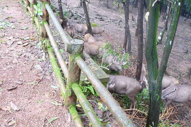pilikula-nisargadhama_mangalore-tourist-places