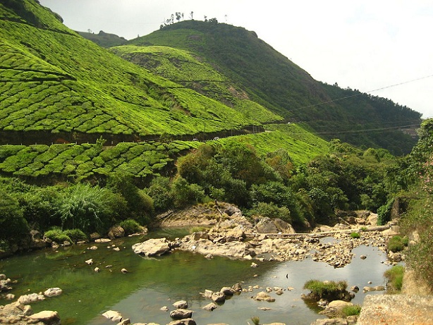 pothamedu_munnar-tourist-places