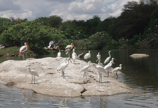 ranganathittu-bird-sanctuary_mysore-tourist-places