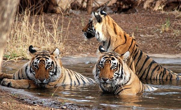 sundarbans_bangladesh-tourist-places