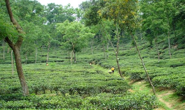 sylhet_bangladesh-tourist-places