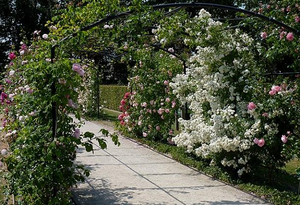 the-rose-garden-of-chandigarh_chandigarh-tourist-places