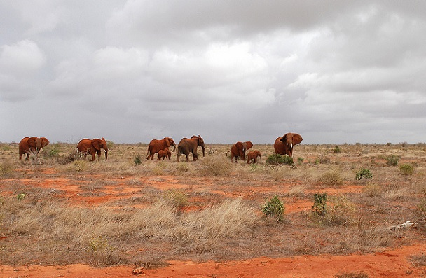 tsavo-national-park_kenya-tourist-places