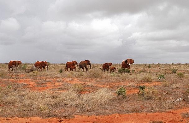 tsavo-national-park_kenya-tourist-places