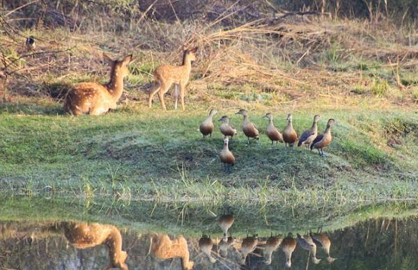 van-vihar-national-park_bhopal-tourist-places