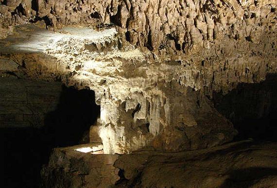 Wonders of Belum Caves -Banyan Tree