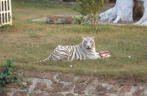 parks-in-bhubaneswar-nandankanan-zoological-park