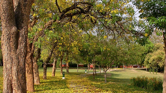 parks-in-chandigarh-fitness-trail-park