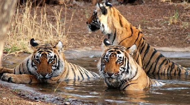 sundarbans_west-bengal-tourist-places