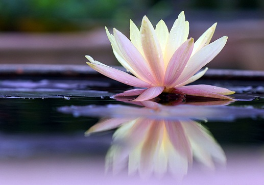 Homemade Beauty Tips For Hair - Lotus therapies