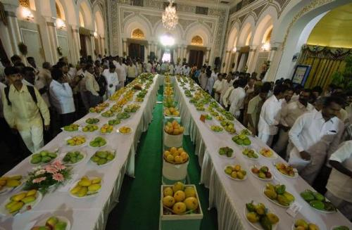 International Mango Festival July
