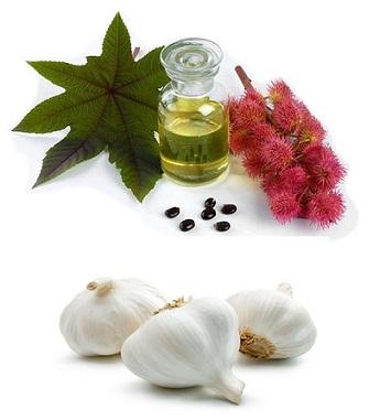 castor and garlic