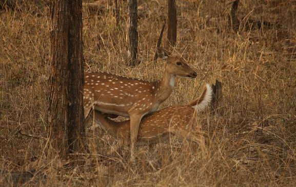 parks-in-madhya-pradesh-panna-national-park